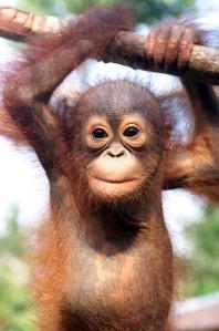 monkeyys